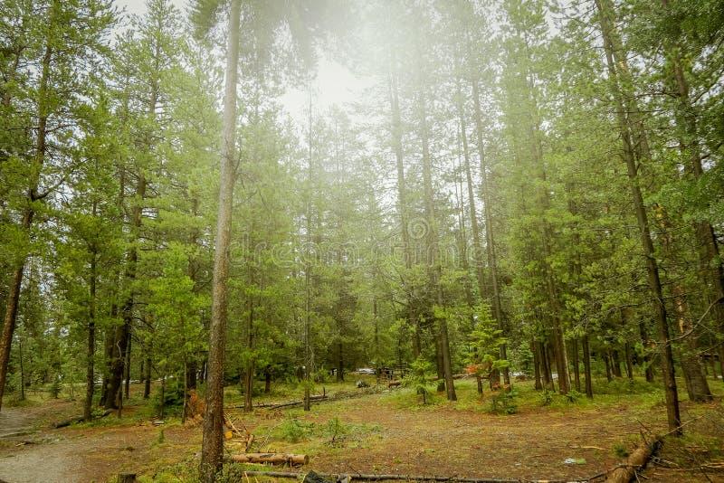 Härlig utomhus- sikt av den dimmiga skogen, lokaliserade storslagna Tetons nästan Jenny Lake arkivbild