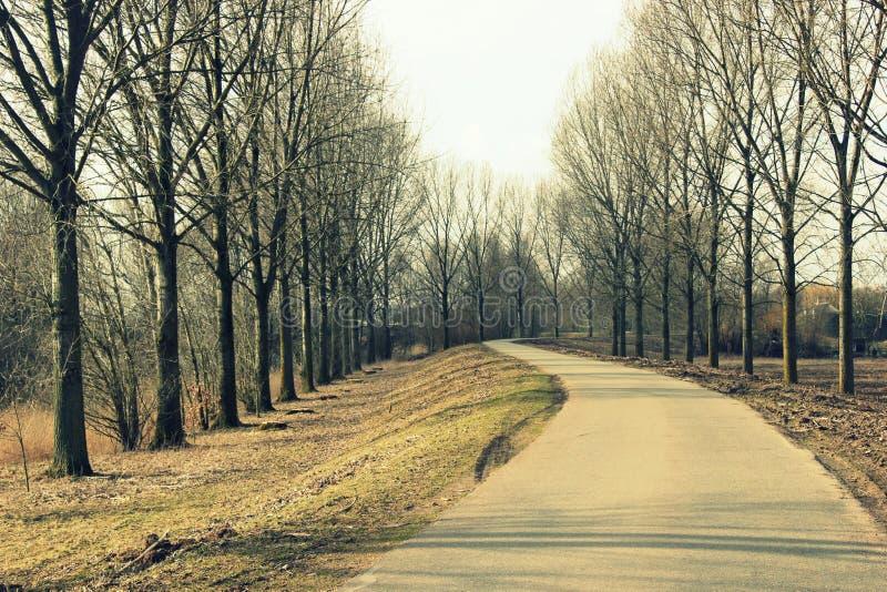 Härlig väg och träd royaltyfria bilder