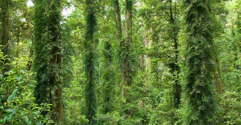 härlig värld för dorrigoarvrainforest royaltyfria bilder