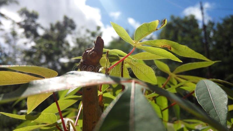 härlig växt royaltyfri foto