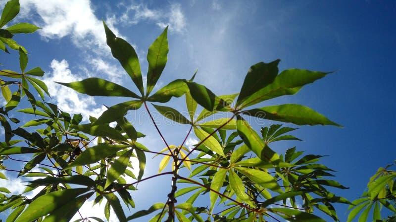 Härlig växt med bakgrund för blå himmel royaltyfri bild
