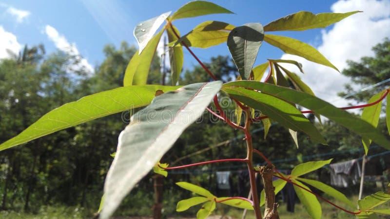 Härlig växt med himmelbakgrund fotografering för bildbyråer