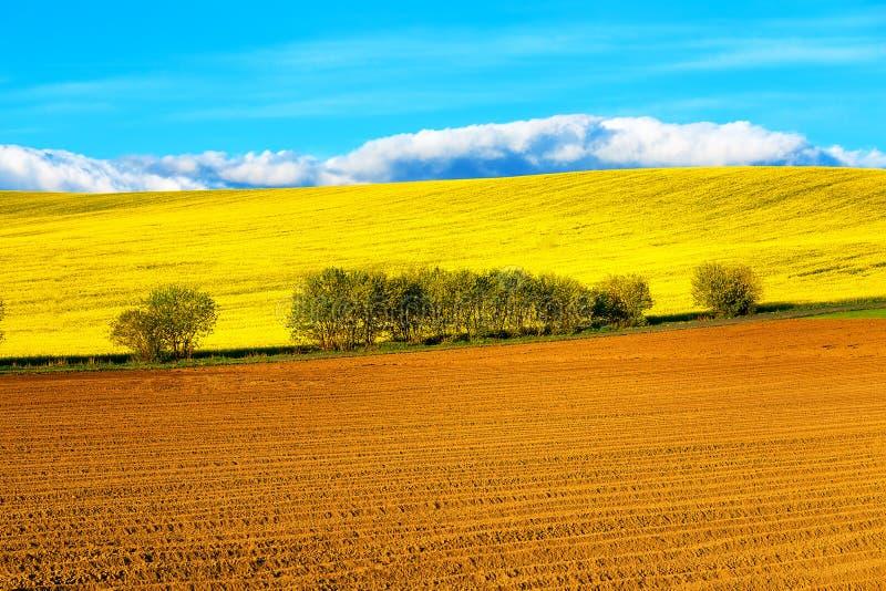 Härlig vår plogat fält och gräsplanäng och träd royaltyfri bild