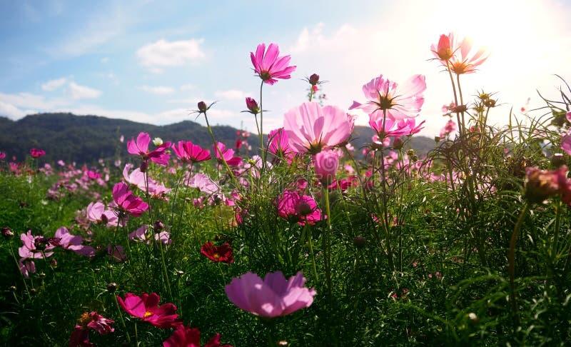 Härlig vårblommablomning med berget och blå himmel Utvalt fokusera royaltyfri foto