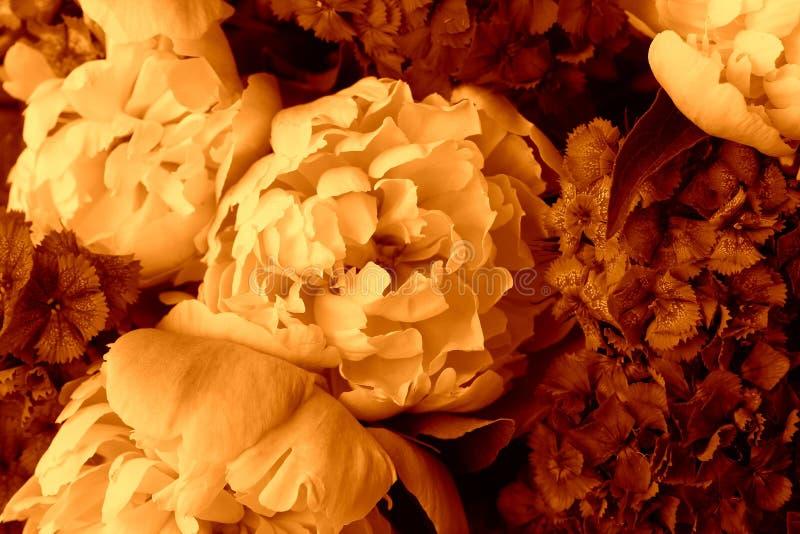 Härlig vårmodellbakgrund med den röda blomman Slut upp av pionblomman arkivfoto