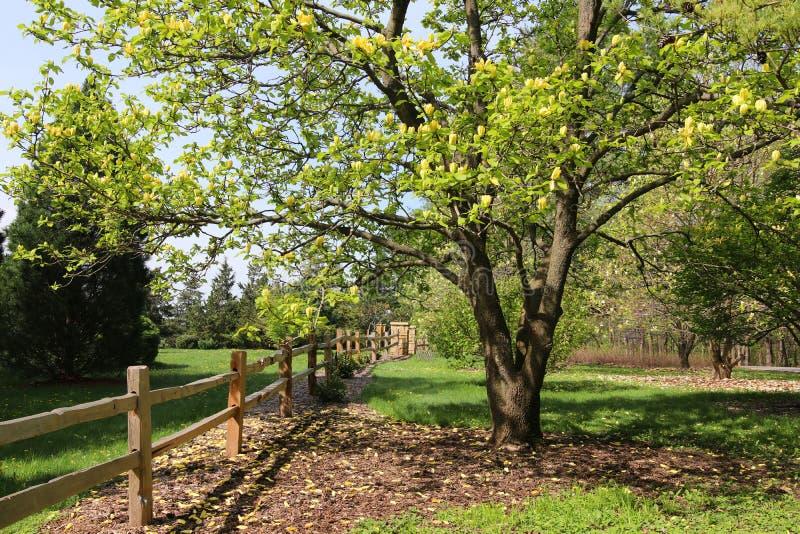 Härlig vårnaturbakgrund med att blomma träd royaltyfria bilder