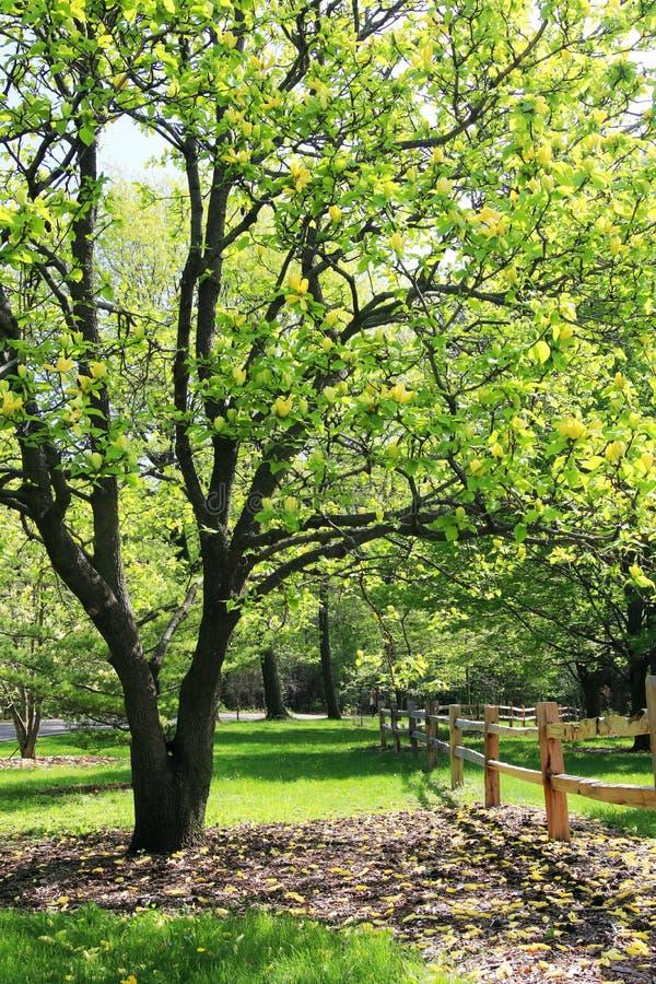 Härlig vårnaturbakgrund med att blomma träd royaltyfri foto
