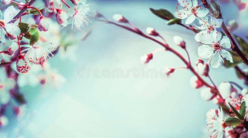 Härlig vårnaturbakgrund med blomningen för körsbärsrött träd på blå himmel royaltyfri fotografi