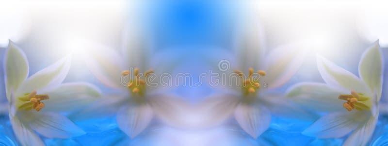 Härlig vårnaturblomning Härlig suddig naturbakgrund, baner för website med trädgårdbegrepp Wellnessbrunnsort royaltyfri illustrationer