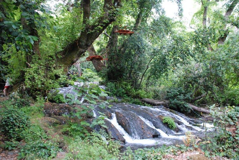 Härlig vattenfall i skogen, Turkiet, Kemer royaltyfri bild