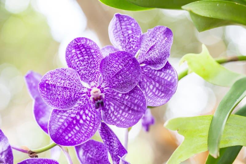 Härlig vibrerande rosa orkidé royaltyfri bild