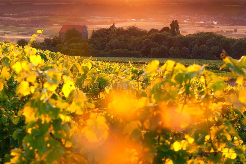 Härlig vingård i Tyskland i staden Cleebronn arkivfoton