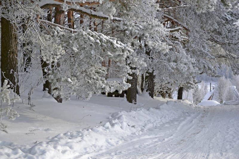 härlig vinter fotografering för bildbyråer