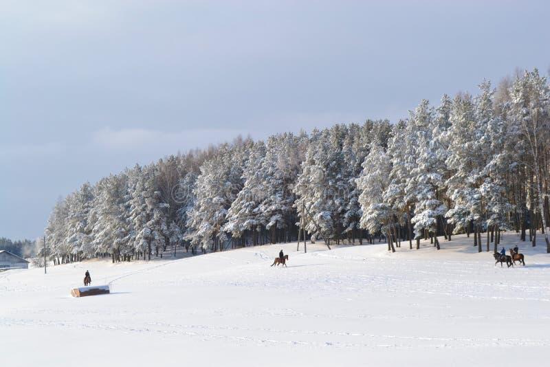 härlig vinter royaltyfri bild
