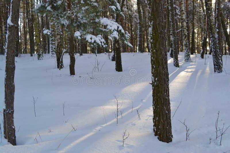 härlig vinter royaltyfria bilder