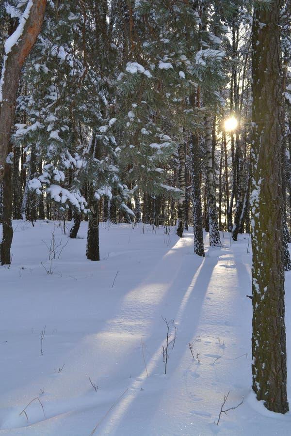 härlig vinter arkivfoton