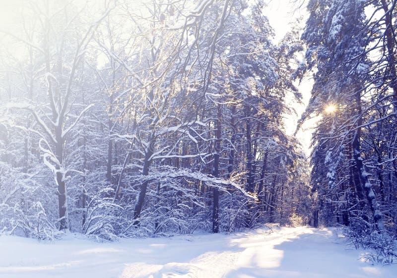 Härlig vinterlandskapbakgrund med snö täckte träd i en kall solig dag Frostiga träd i snöig skog arkivfoto