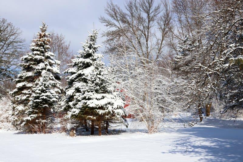 Härlig vinternaturbakgrund arkivfoton