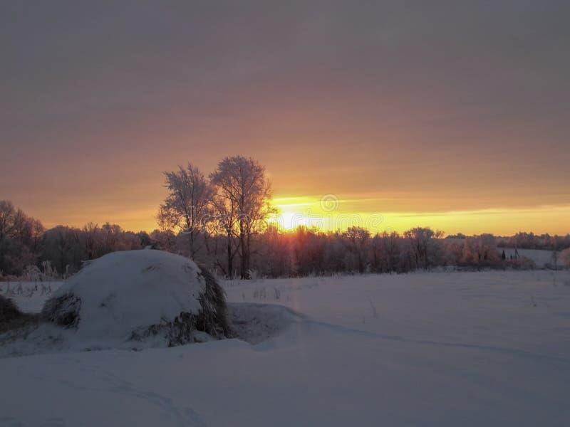 Härlig vintersolnedgång med träd i snön lantlig liggande royaltyfri fotografi
