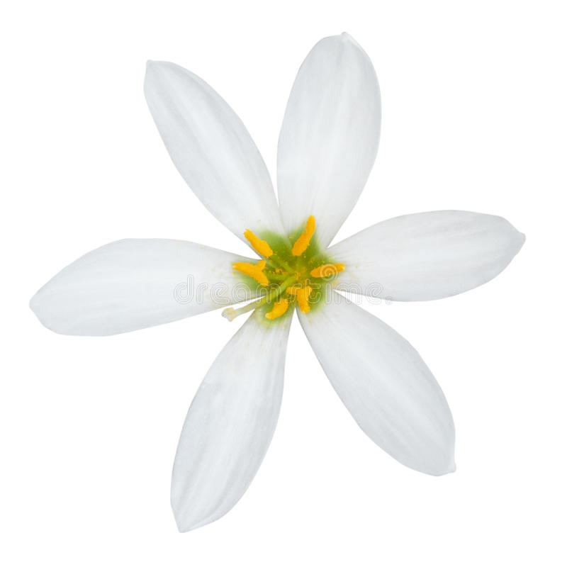 Härlig vit blomma royaltyfri bild