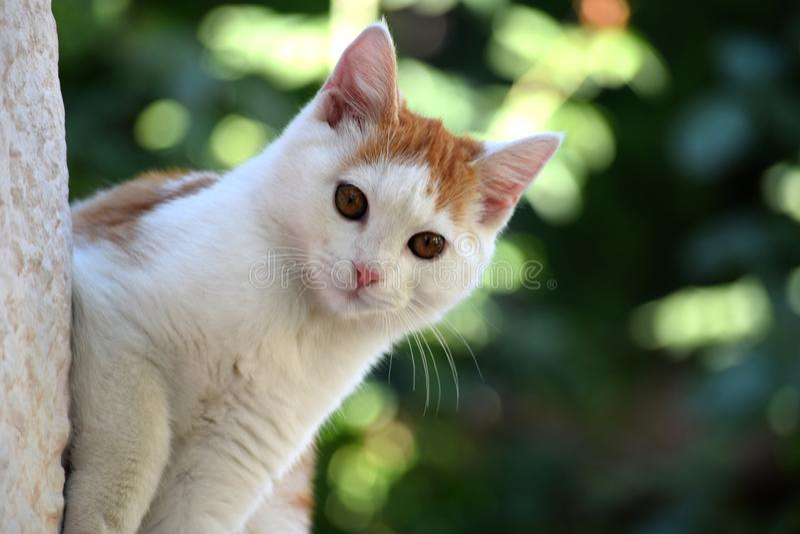 Härlig vit brun kattskvallerbytta och titt royaltyfri foto