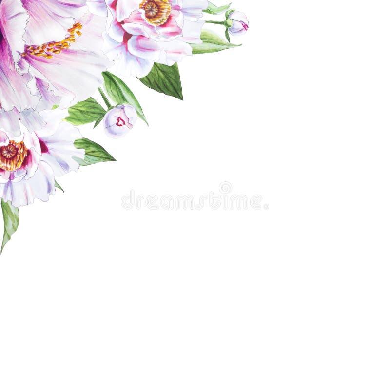 Härlig vit pionhörnram Bukett av blommor Blom- tryck Mark?rteckning royaltyfri illustrationer