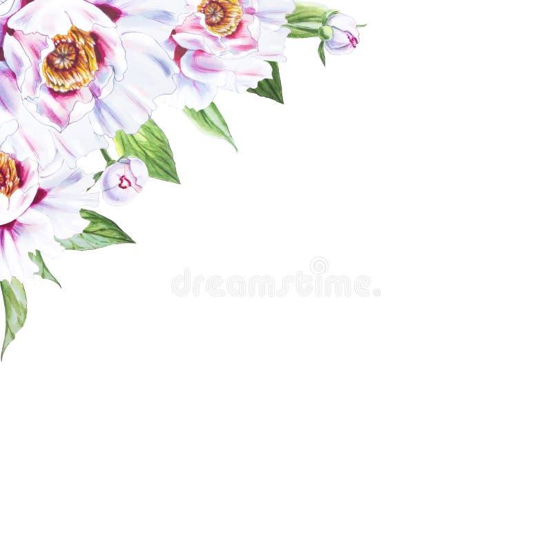 Härlig vit pionhörnram Bukett av blommor Blom- tryck Mark?rteckning stock illustrationer