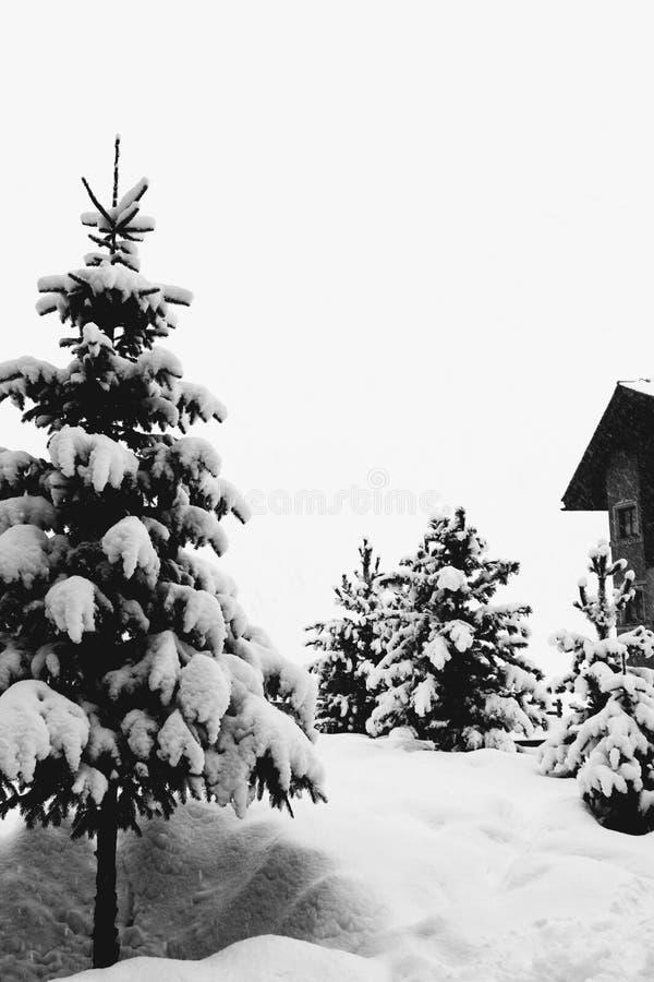Härlig vit snö på träden i Italien royaltyfri bild