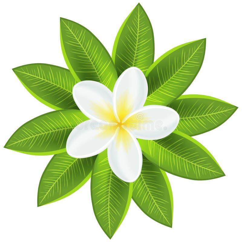 Härlig vit tropisk blomma vektor illustrationer