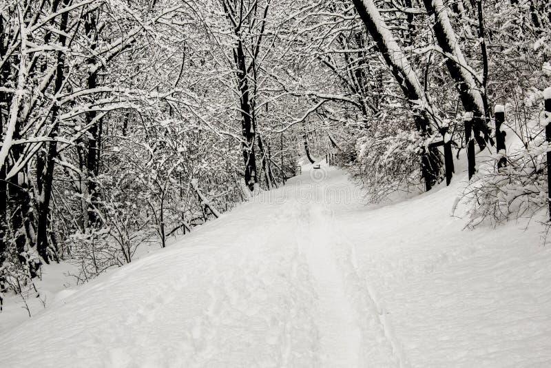 Härlig vit vinter i skog med filialer i snö arkivfoto