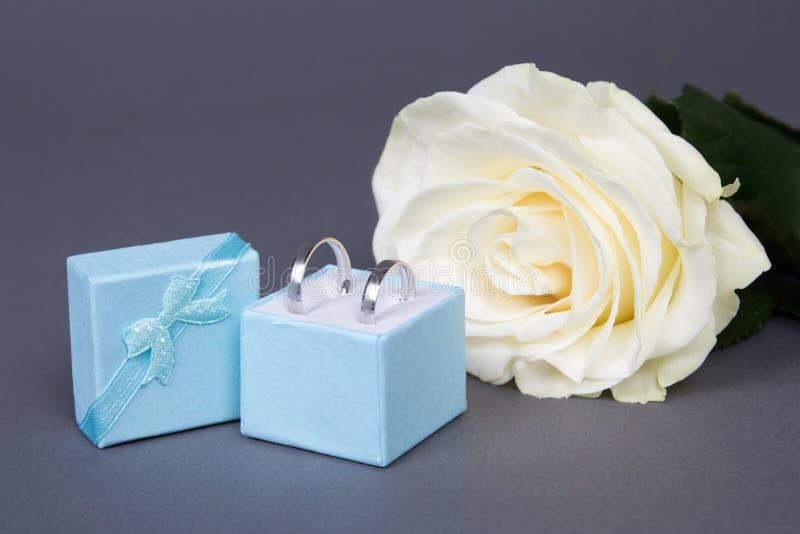 Härlig vitrosblomma och vigselringar i blå ask över G fotografering för bildbyråer