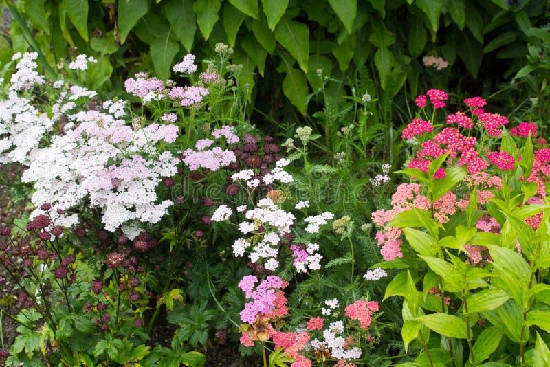 Härlig walled trädgård fotografering för bildbyråer