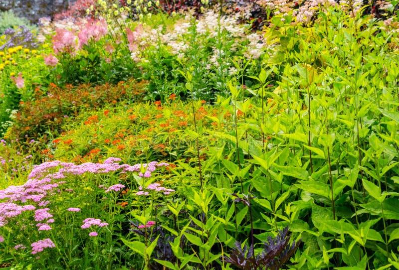 Härlig walled trädgård, UK fotografering för bildbyråer