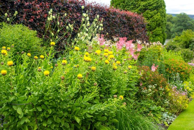 Härlig walled trädgård, UK arkivfoto