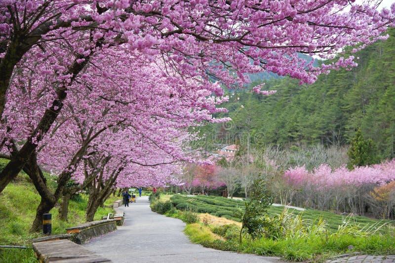 Härlig Wuling lantgård Taiwan royaltyfria bilder