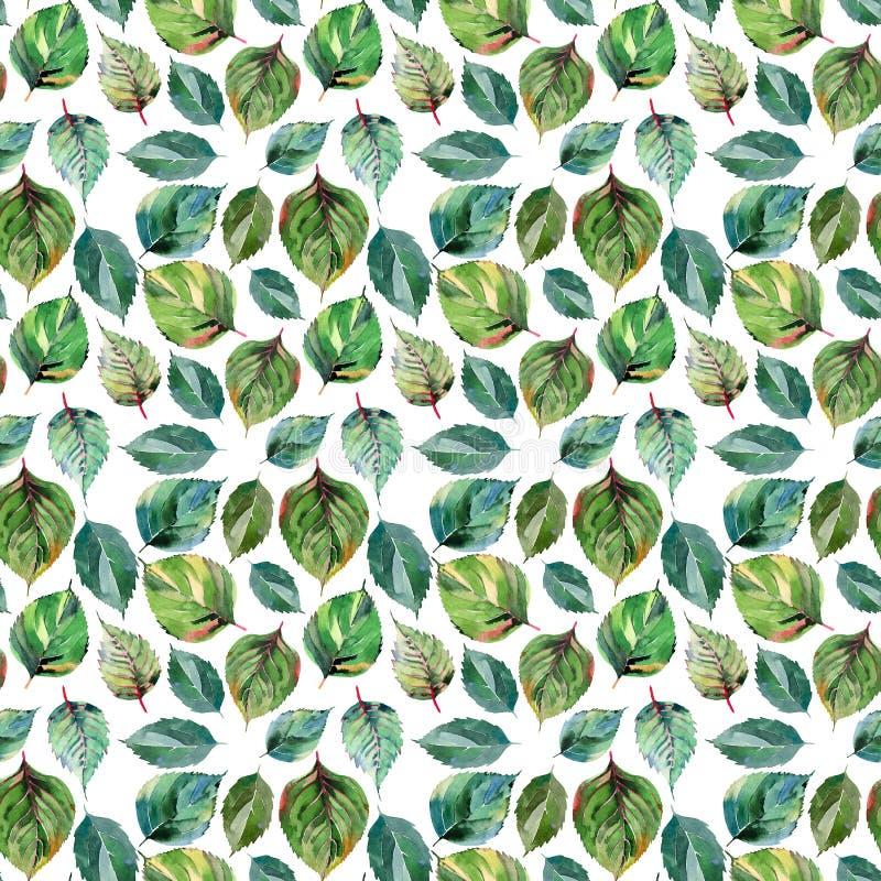 Härliga älskvärda gulliga underbara grafiska ljusa blom- växt- sidor för höstgräsplanguling mönstrar vattenfärgen vektor illustrationer