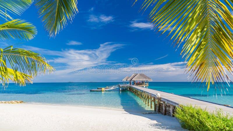 2007 härliga öliggandemindanao philippines föreställer taget tropiskt Maldiverna östrand och palmträd Perfekt tropiskt baner royaltyfri bild