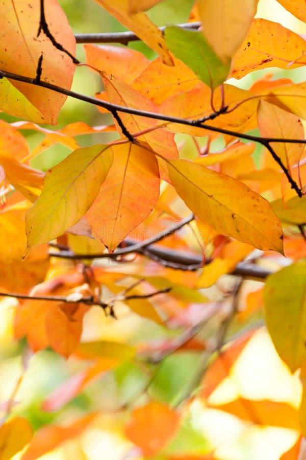 Härliga Autumn Leaves Colored Orange, guling, rött, grönt och P arkivfoto