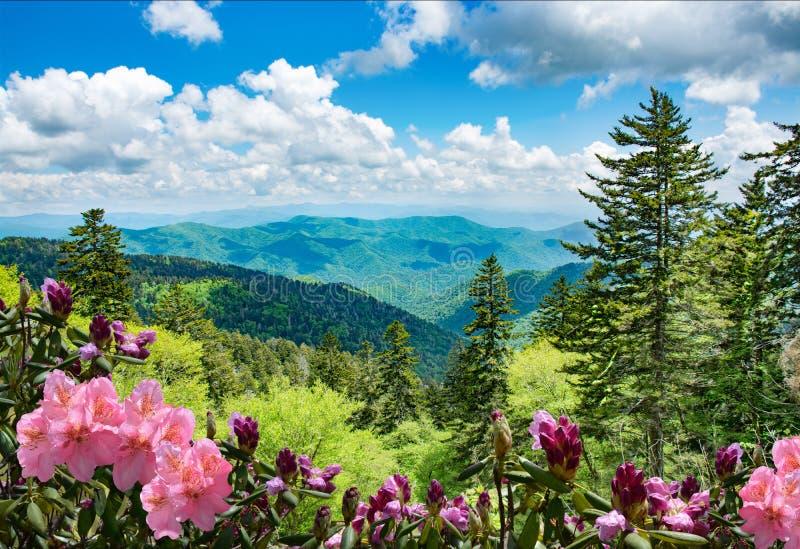 Härliga azaleor som blommar i North Carolina berg royaltyfri bild