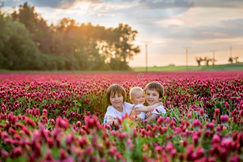 Härliga barn i ursnyggt fält för karmosinröd växt av släktet Trifolium på solnedgång arkivbilder