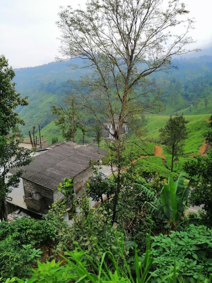 Härliga bergiga tefält på nuwaraeliyaen, Sri Lanka royaltyfria foton
