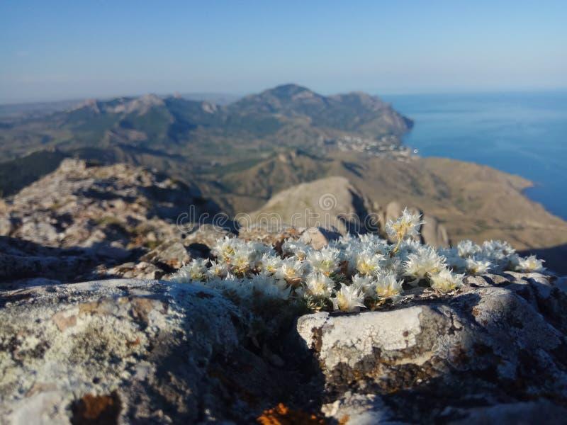 Härliga bergkanter och vårblommor i bakgrund Europa och hav och blå himmel arkivbild
