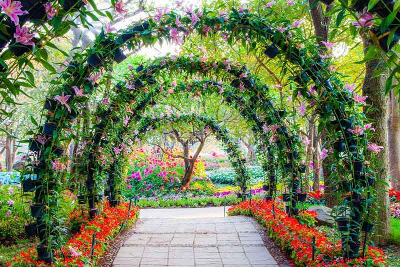 Härliga blommabågar med gångbanan i dekorativa växter arbeta i trädgården arkivbild