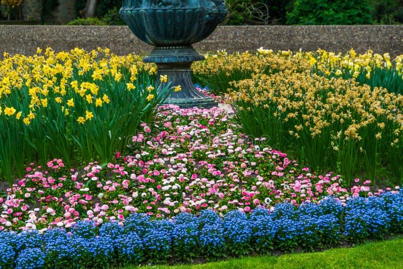Härliga blommande blommor i en lyxig trädgård, färgrika blommor som blomstrar under våren, dekorerade trädgårdar arkivbilder