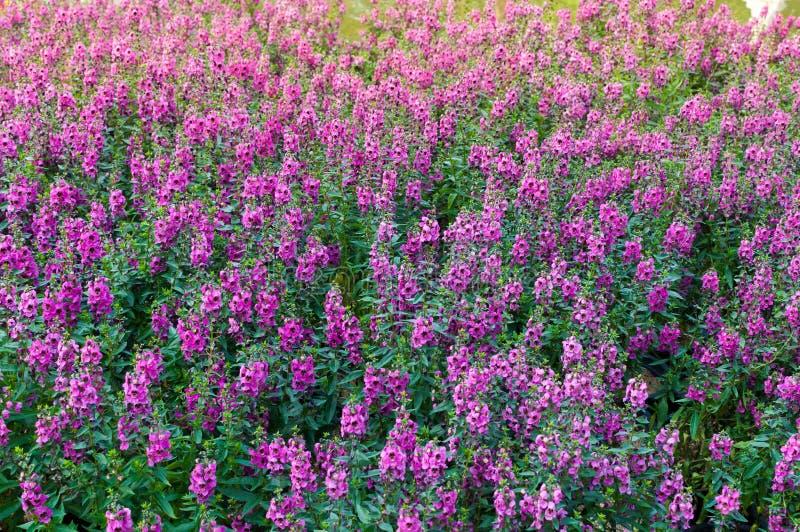 Härliga blommande vildblommor på ängen i sommartiden royaltyfria bilder