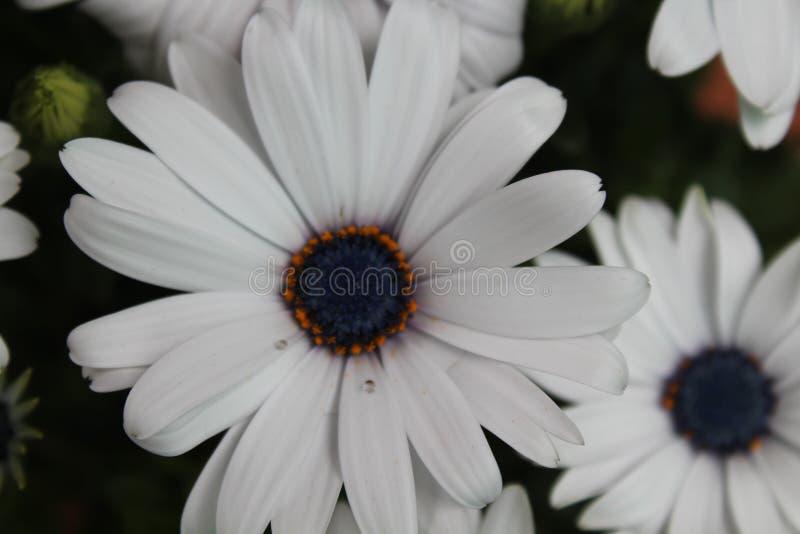 Härliga blommor av en oerhörd färg och en special lukt royaltyfri fotografi