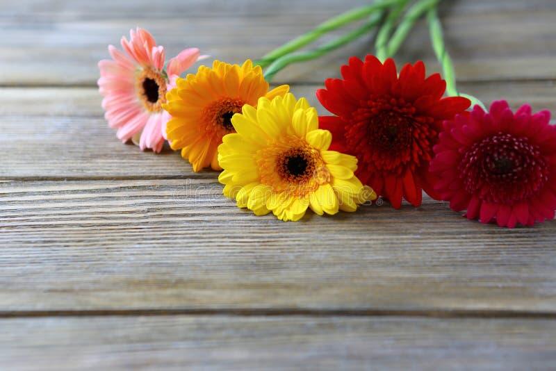 Härliga blommor för Gerbera på brädena royaltyfri bild