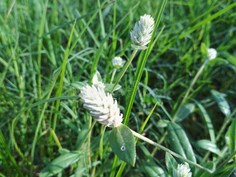 Härliga blommor för sommar royaltyfria bilder