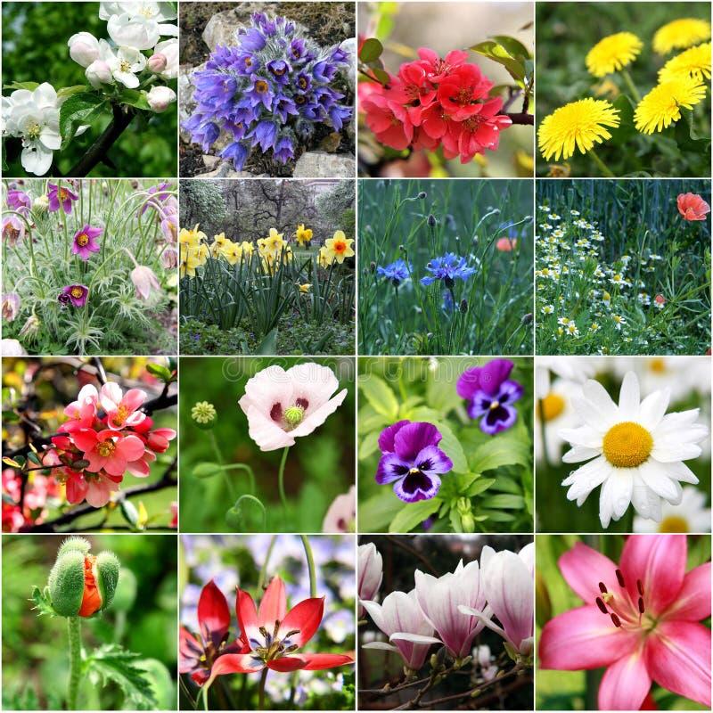 Härliga blommor för vårcollage arkivfoton