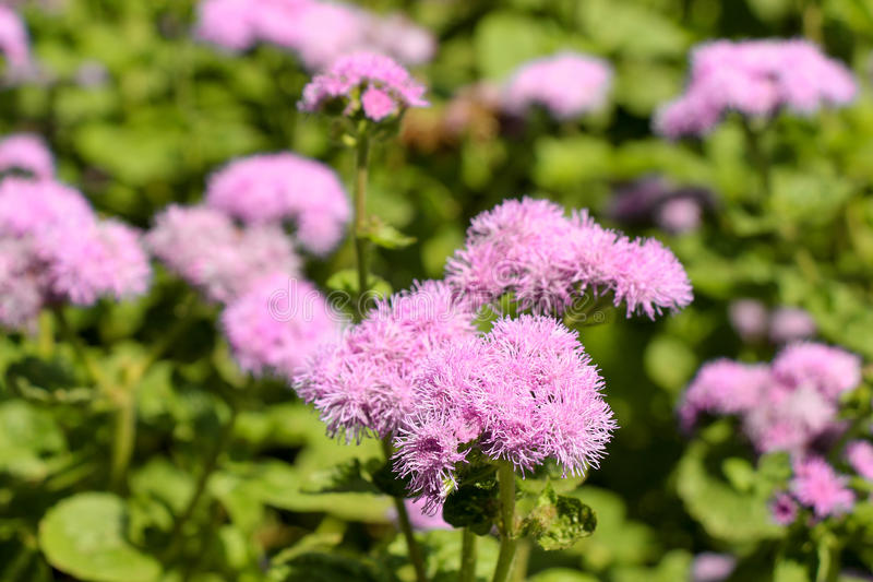 Härliga blommor i natur royaltyfri bild